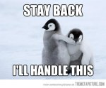funny-baby-penguins-cute-fight
